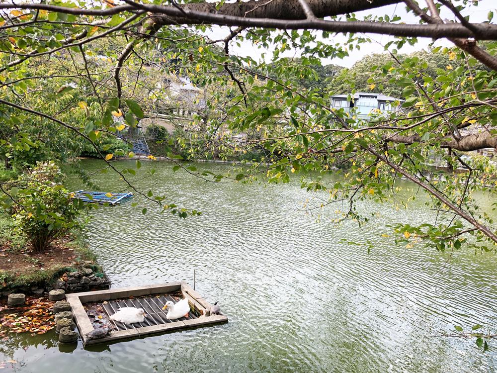鎌倉・大船・穴場スポット・玉縄・谷戸池の生き物